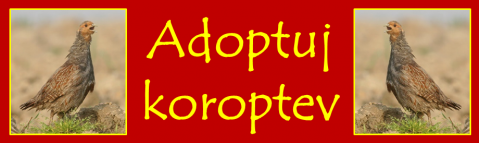 banner-adopce.png