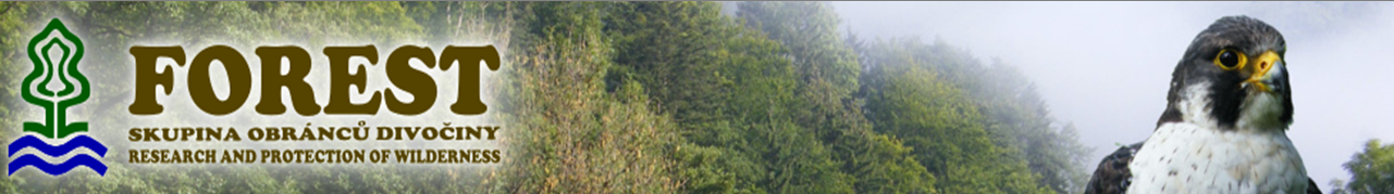 banner_forest_01.png